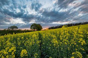 Бесплатные фото поле,цветы,закат,деревья,пейзаж