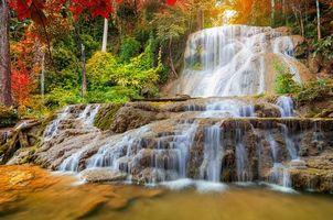 Photo free autumn, Thailand, trees