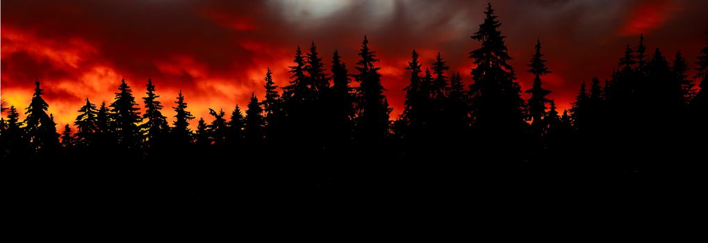 Photo free forest, sunset, spruce