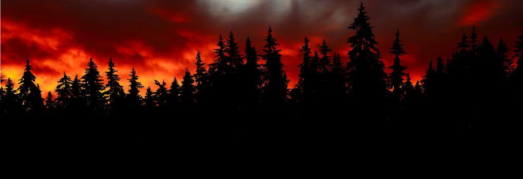 Фото бесплатно лес, закат, ели
