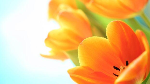 Photo free photos, yellow, petals