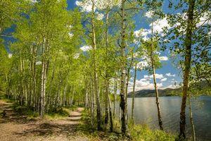 Бесплатные фото Рыбное озеро,Юта,озеро,лес,деревья,пейзаж