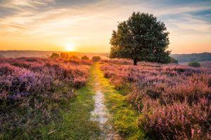 Бесплатные фото закат,поле,тропинка,лаванда,цветы,деревья,пейзаж