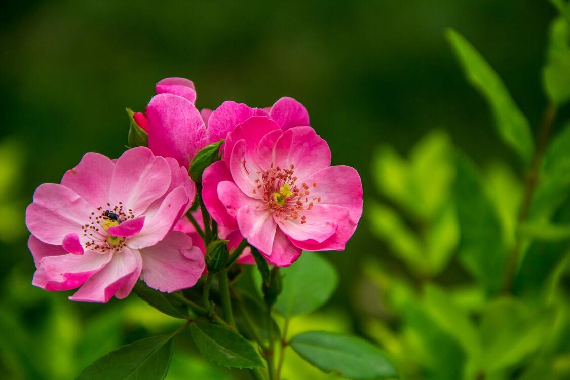Фото наземное растение ботаника полевой цветок - бесплатные картинки на Fonwall