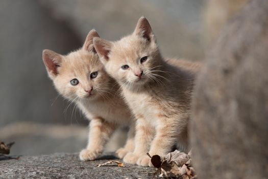 Фото бесплатно котята, милые, листья