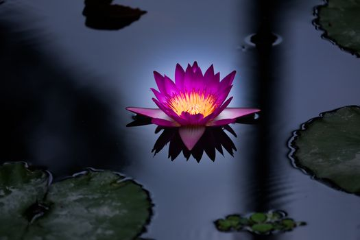 See photos of water lilies, pond