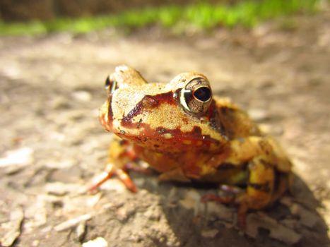 Photo free wildlife, frog, toad