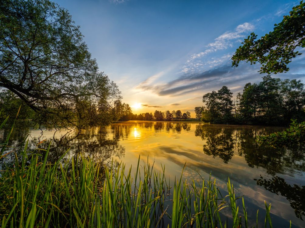 Beautiful pictures of trees, a lake for free