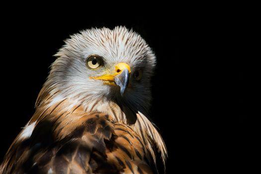 Photo free beak, eagle, black background