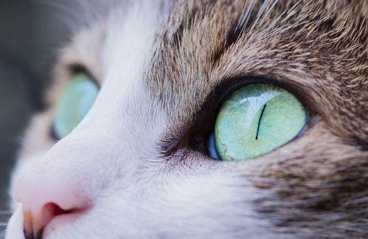 Photo free cats, cat eyes, muzzle