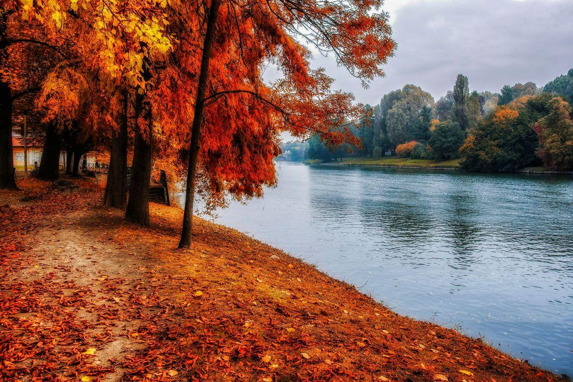 Фото бесплатно река, парк, пейзаж - на рабочий стол