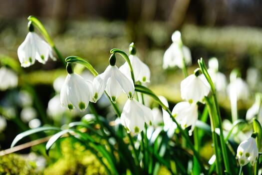 Photo free flowers, flower, snowflake