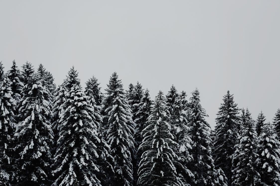 Фото бесплатно деревья, заснеженный, снег, trees, snowbound, snow, природа