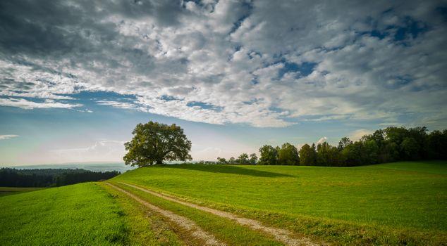 Фото бесплатно холм, трава, дерево