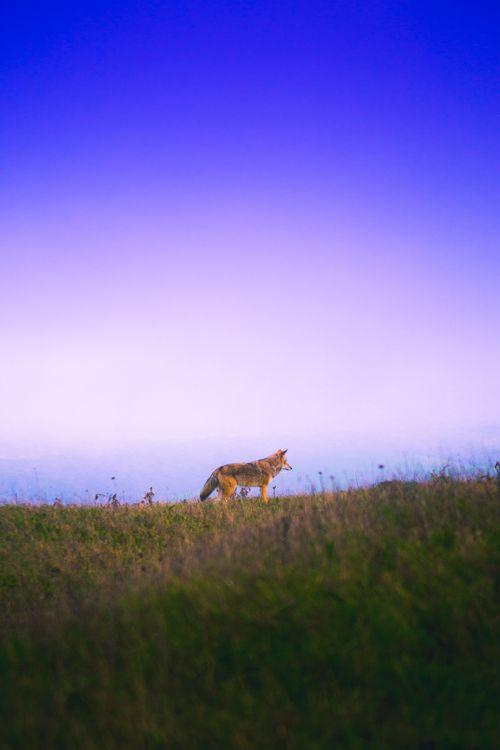 Фото бесплатно лисица, трава, небо - на рабочий стол