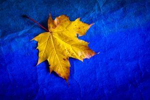 Фото бесплатно лист, лист клёна, осенний лист