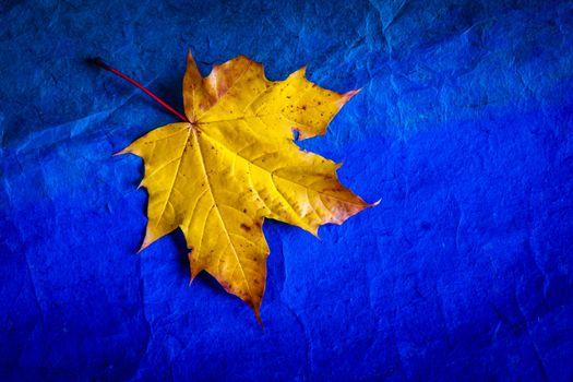 Заставки лист, лист клёна, осенний лист