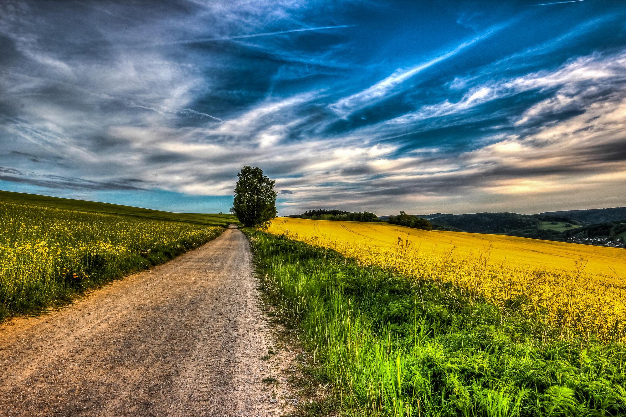 Обои закат, поле, дорога, деревья