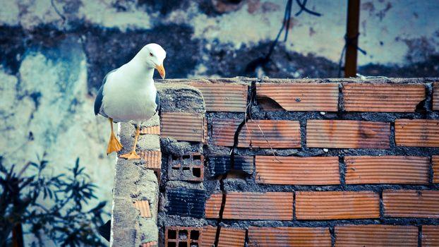 Фото бесплатно чайка, птица, стена