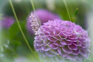 Фото бесплатно флора, цветочная композиция, георгин