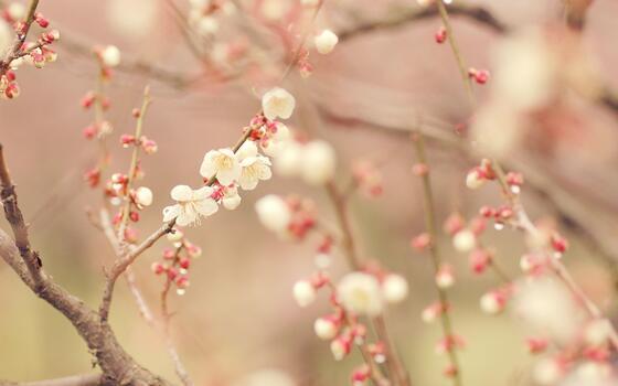 Фото бесплатно весна, дерево, цветок