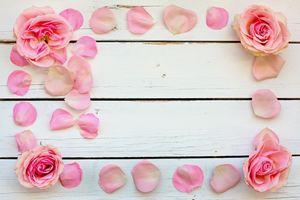 Фото бесплатно wood, roses, flower, розы, бутоны, лепестки, розовые