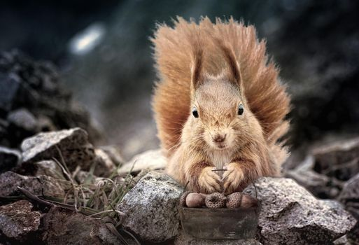 Photo free squirrel, acorns, art