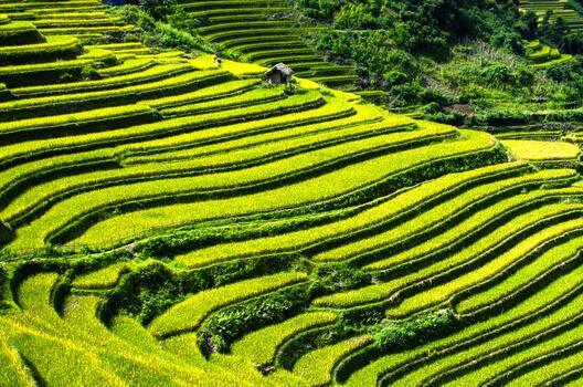 Photo free landscape, field, green