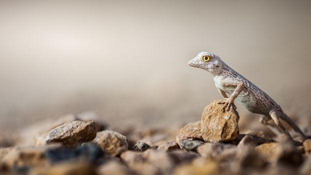 Photo free lizard, reptile, macro