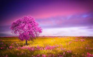 Фото бесплатно искусство, цветы, небо