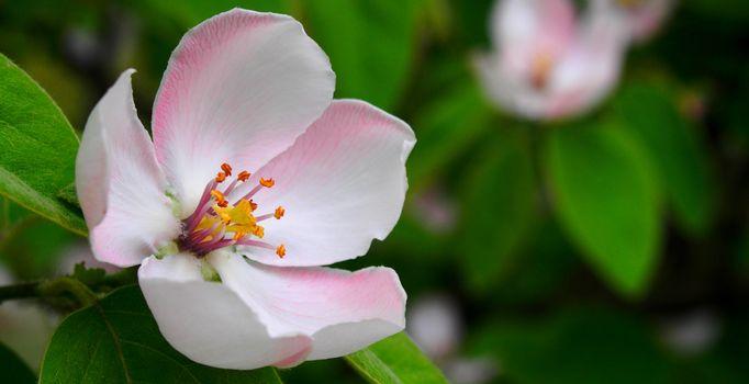 Photo free macro photography, petal, pistil
