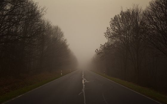 Photo free long road, mist, forest