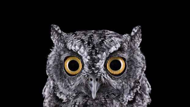 Photo free owl, spooky, look