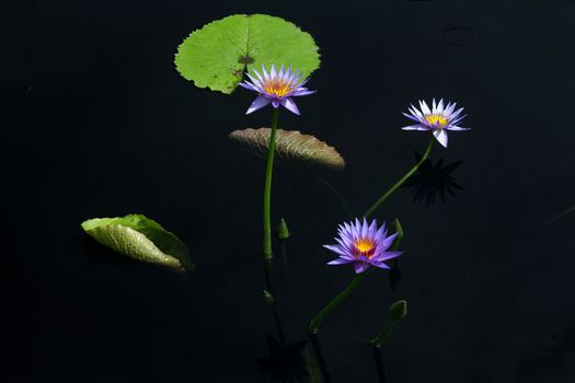 Photo free water lily, flower, flowers