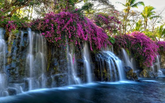 Заставки водопад, розовые цветы, пруд