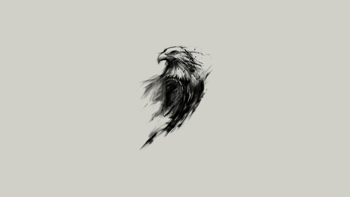 Photos for free eagle, artwork, minimal - to the desktop
