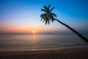 Бесплатные фото море,закат,берег,пальма,пляж,пейзаж
