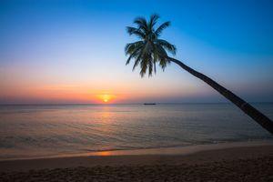 Фото бесплатно пейзаж, пальмы, закат