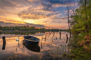 Бесплатные фото озеро,закат солнца,сумерки,лебедь,деревья,лес,природа