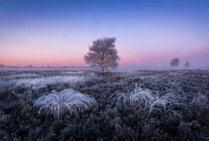 Photo free sunset, field, hoarfrost