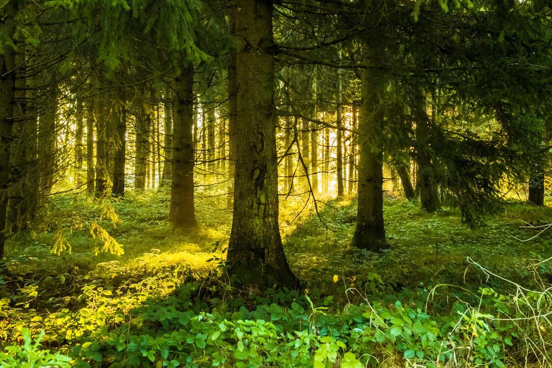 Фото солнечный свет лесной массив умеренный широколистный и смешанный лес - бесплатные картинки на Fonwall