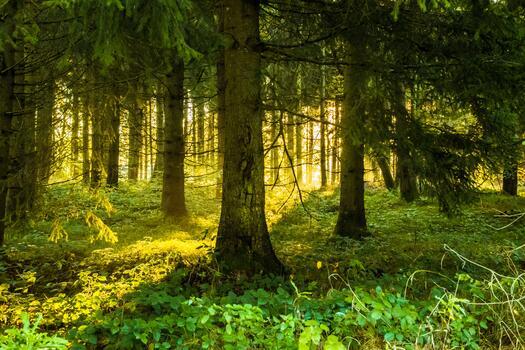 Фото бесплатно солнечный свет, лесной массив, умеренный широколистный и смешанный лес