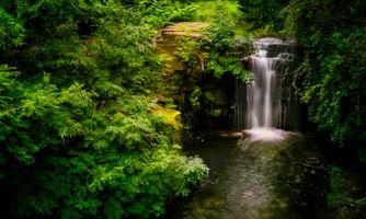Фото бесплатно деревья, красивые, растения