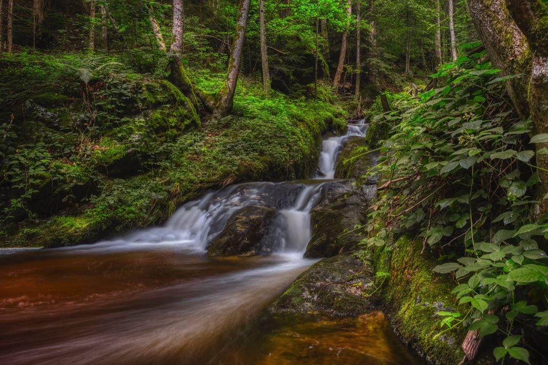 Фото природа Австрия ручей - бесплатные картинки на Fonwall