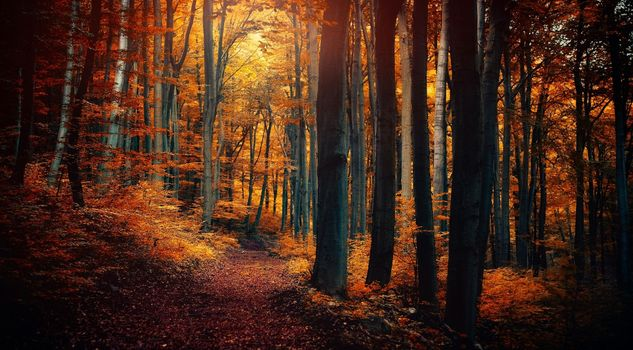 Photo free array an forest, autumn, atmosphere