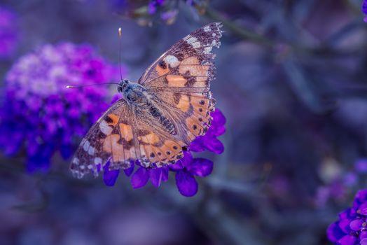 Фото бесплатно цветок, насекомое, флора