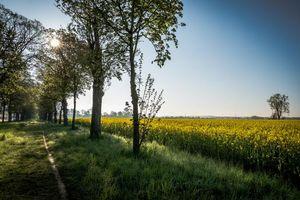 Бесплатные фото поле, деревья, цветы, тропинка, пейзаж