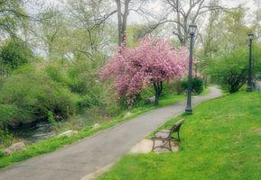 Photo free spring, park, bench