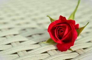 Фото бесплатно организация цветов, близко, красота