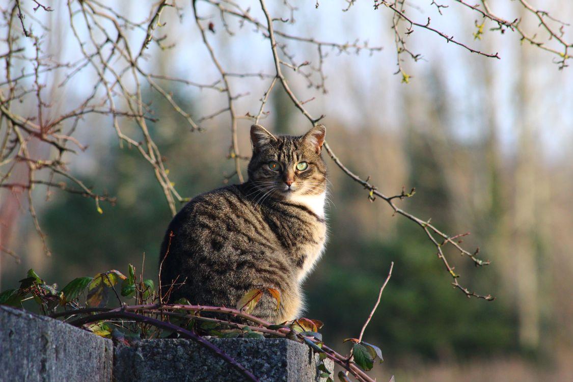 Фото кошка стоя дерево - бесплатные картинки на Fonwall